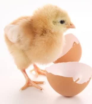 Como saber si un huevo esta fresco