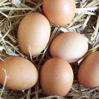 Huevos alimentación infantil