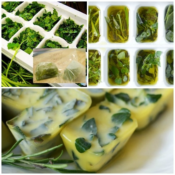 Congelar hierbas frescas en aceite de oliva pequerecetas for Como cocinar acelgas frescas