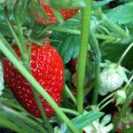 frutas verduras limpieza
