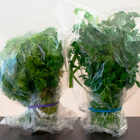 conservar-hierbas-aromaticas