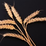 Día nacional sin gluten: conoce la celiaquía