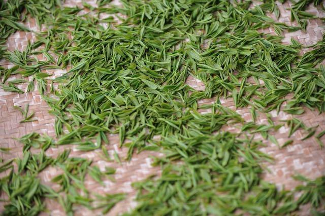 Té verde para qué sirve