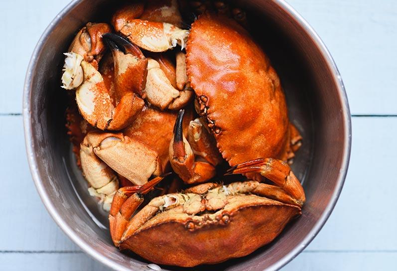 Cocer buey de mar vivo